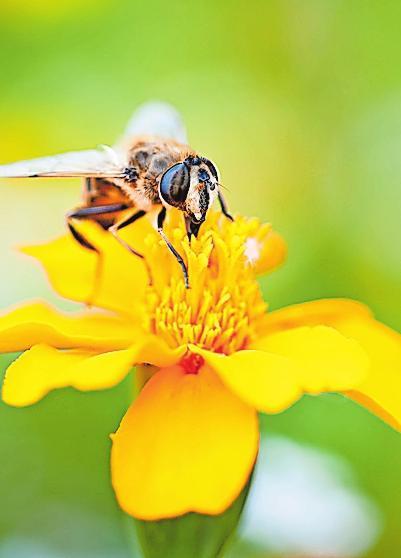 Spezielle Saatmischungen locken insbesondere Bienen an.