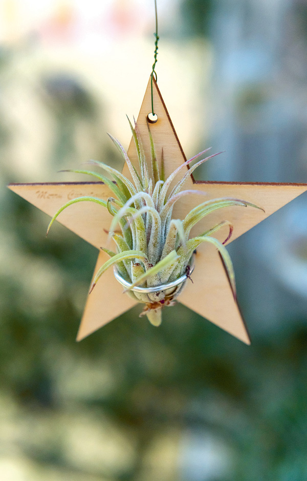 Tillandsia Set (airplantshop.nl). Werkfotos