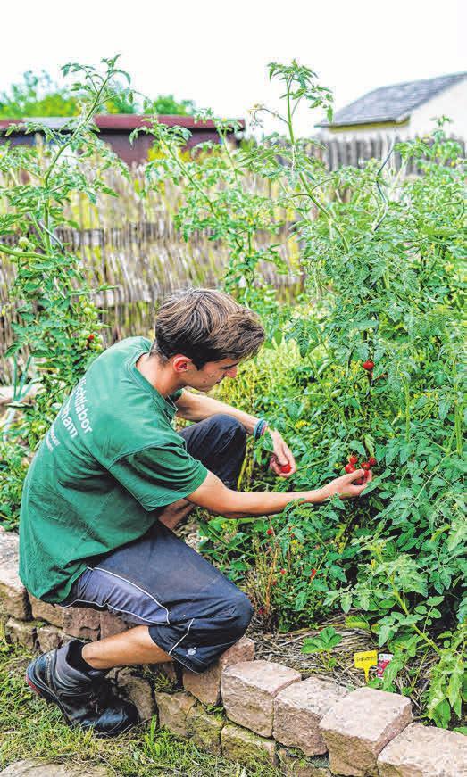 Ein Freiwilliges Ökologisches Jahr ist möglich. Foto: Uwe Anspach
