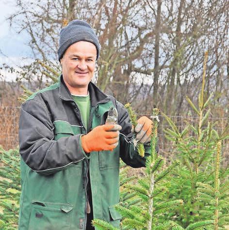 Jens Grastorf bietet ab dem 10. Dezember wieder seine 1-a-Qualitäts-Tannenbäume an.