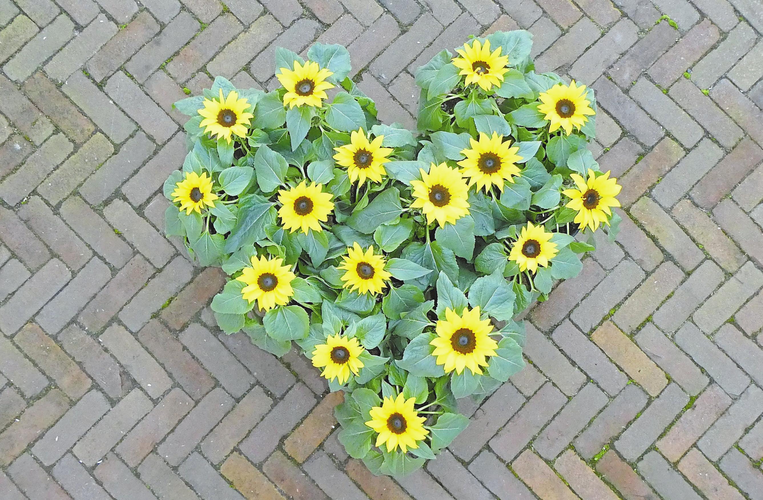 Eine Sonne für Mama Image 1