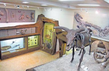 Eindruckvoller Fossiliensaal: der Mühlenkeller, rechts das mächtige Knochengerüst eines 10.000-jährigen Auerochsen.