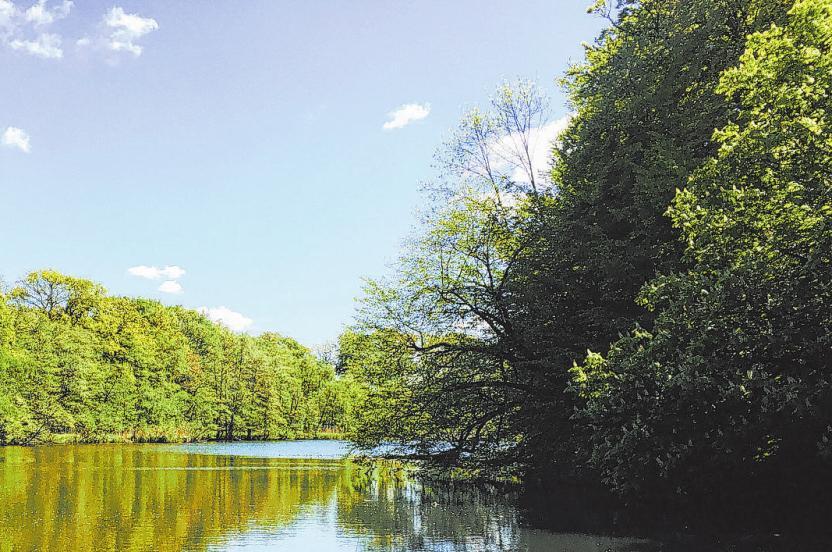Unberührte Natur, reine Luft, Ruhe: Viele Menschen, die in den Walddörfern oder im Alstertal aufgewachsen sind, kehren später hierher zurück – oft mit eigenem Nachwuchs