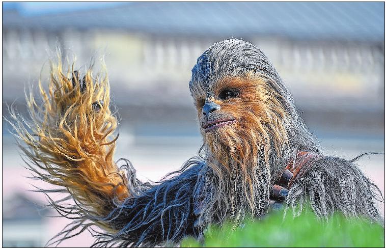 """Außerirdisch: Chewbacca aus """"Star Wars"""".  Archivfoto: Britta Pedersen/dpa"""