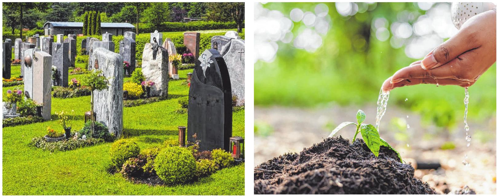 Friedhöfe sollen sich in den kommenden Jahren in naturnahe Parks oder gar Wälder verwandeln. FOTOS: CB
