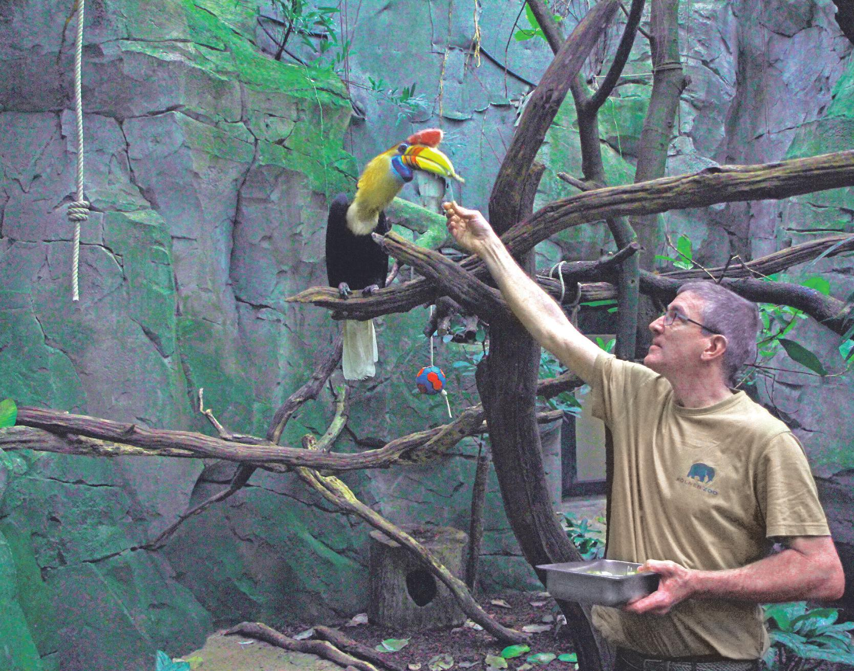 Die Hornvögel im Tropenhaus fressen Breuer längst aus der Hand Bild: Büge