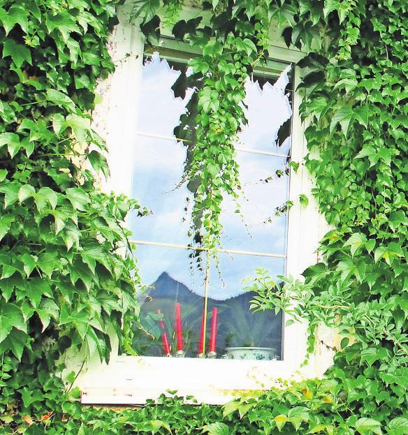 Natürliche Klimaanlage: Auch zu Fassadenbegrünungen können die Experten von ECS beraten. Foto: dpa