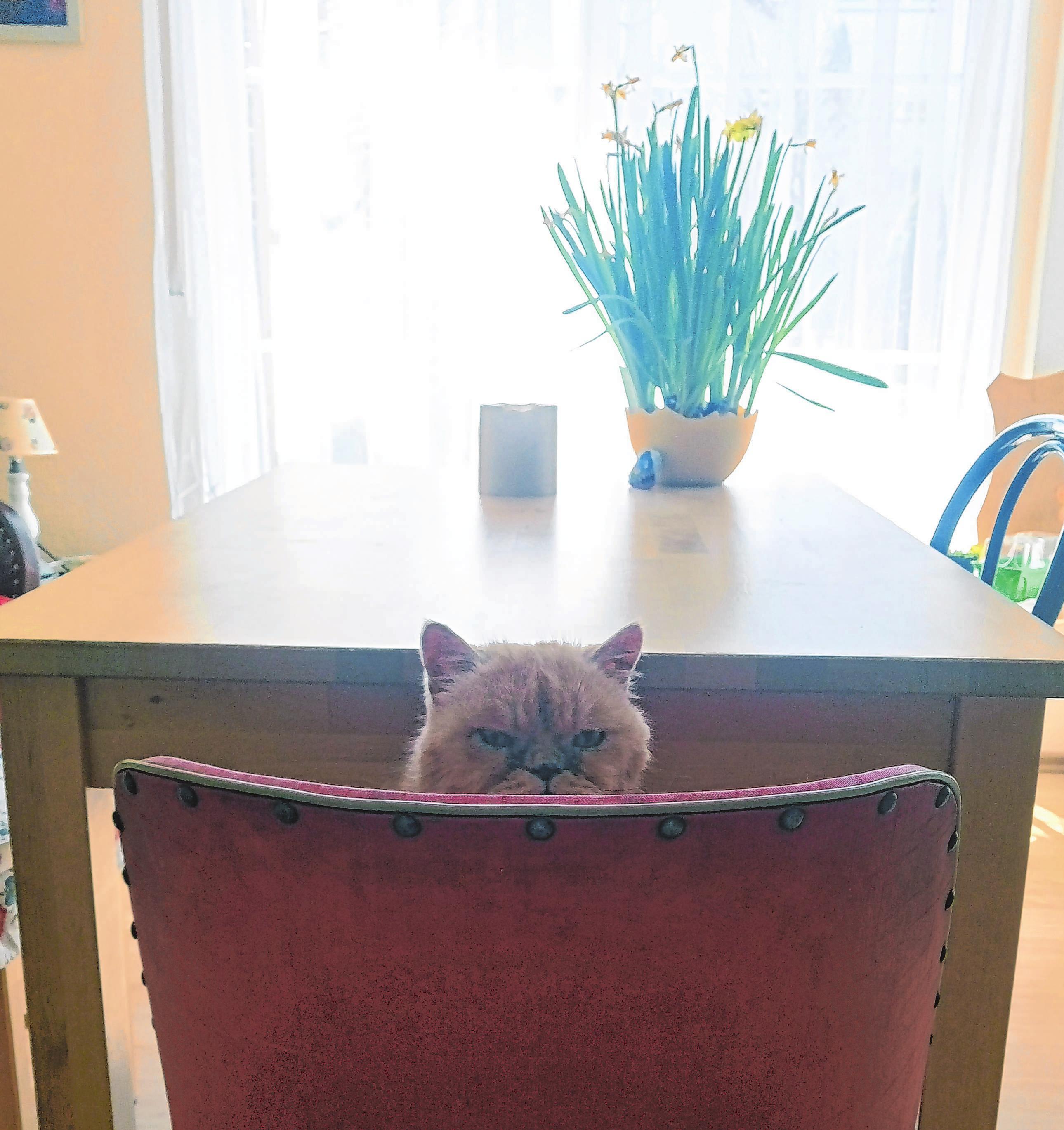 """Gerade bei Katzen ist eine Betreuung in der heimischen Umgebung das Mittel der Wahl. Foto: Mobile Tierbetreuung """"Mau"""""""