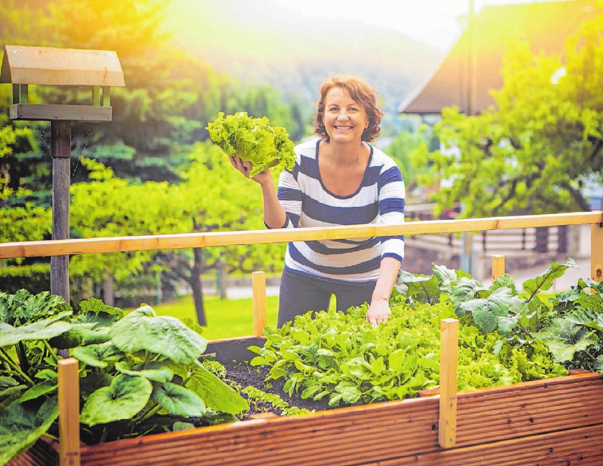 Eigenes Gemüse ernten: Neben normalen Beeten lässt sich im Kleingarten auch ein Hochbeet anlegen. Foto: ©Patrizia Tilly - fotolia.com