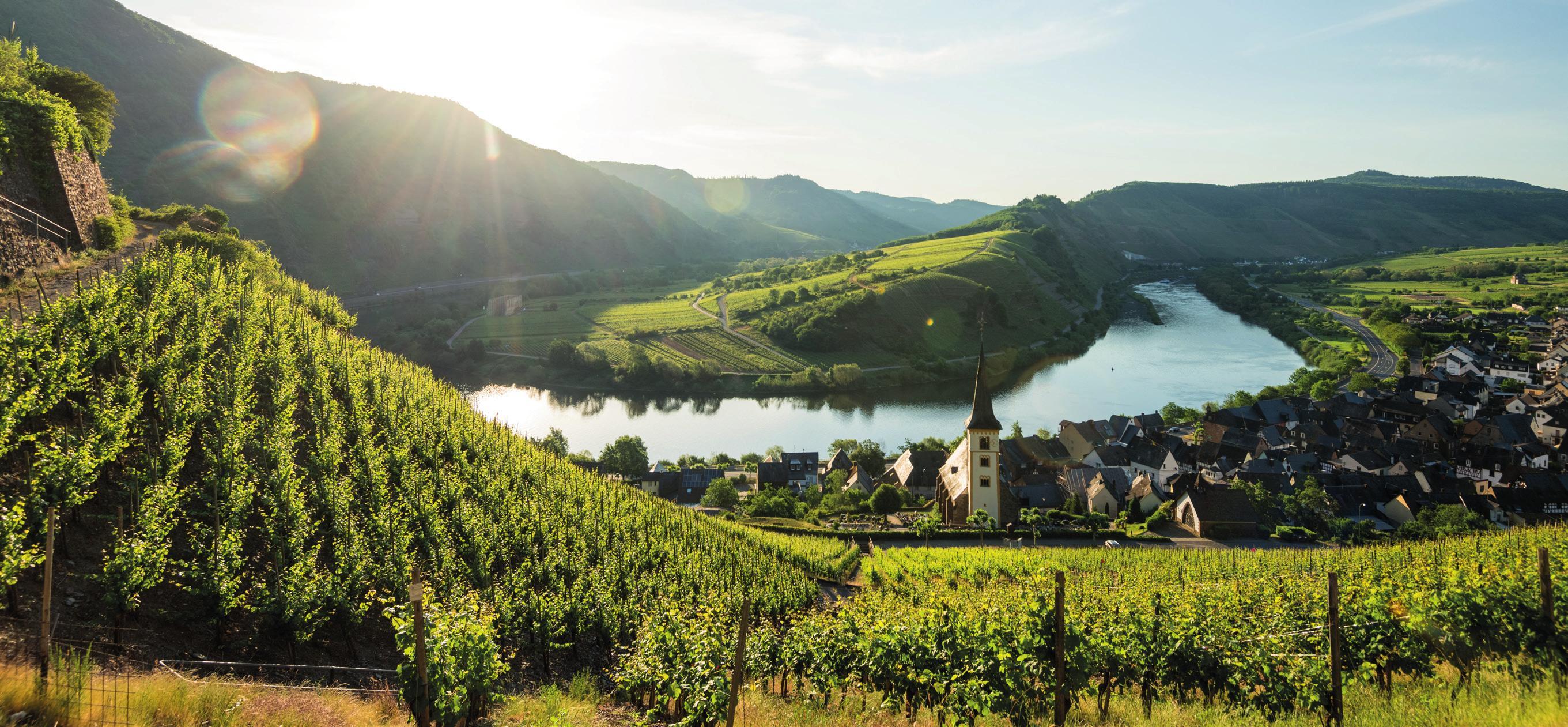 Die Ortsgemeinde Bremm liegt an einer Moselschleife und ist umgeben von den Rebhängen des Calmont, der mit 65 Grad Neigung steilsten Weinberglage Europas.