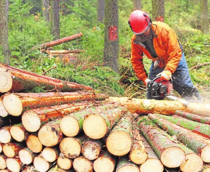 Forstwirte sind vor allem in den Wintermonaten mit der Holzernte beschäftigt. FOTO: ABADONIAN / ISTOCK