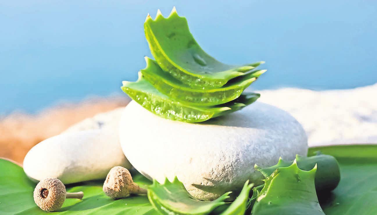 Pflege für die Haut: Im Naturahaus gibt es hochwertige Aloe-vera-Shakes, die gereizte Sonnenhaut mit Feuchtigkeit versorgen.