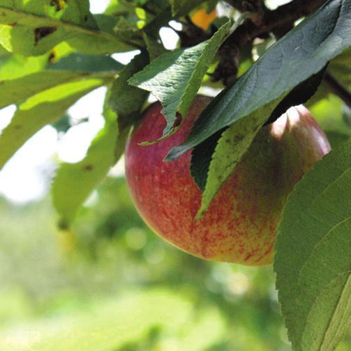 Zwischen Obstbäumen und grünen Hecken Image 5