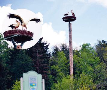 Auch ein Storchenpaar liebt den Golfplatz Großensee