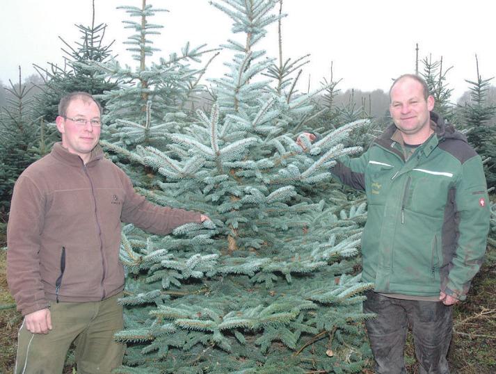 Die Brüder Hauke (l.) und Jan Cordes kümmern sich auf dem Gartenhof Wittmoor in Holm um den Verkauf der selbst gezogenen Weihnachtsbäume Foto: Kuno Klein