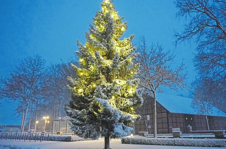 Der Blick vom Saerbecker Rathaus auf die davor stehende verschneite Tanne.