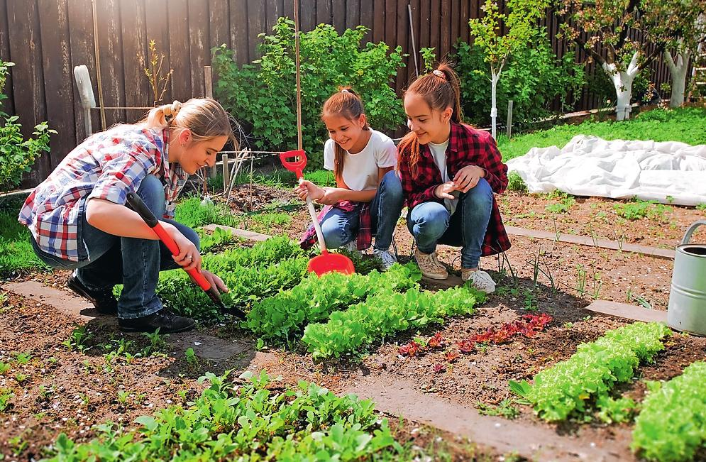 Umdenken: Bio-Gemüse aus dem eigenen Garten. FOTO: STOCK.ADOBE.COM/KYRILL RUISCHOW