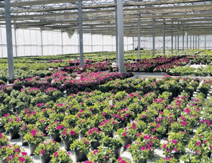 Alles für Gartenparadies Image 5