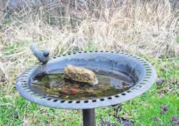 Im Naturgarten des NABU finden Vögel immer Wasser.