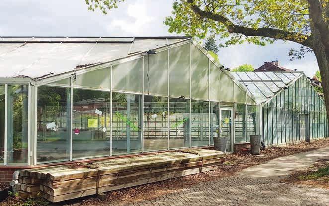 Die letzte Lokstedter Traditionsgärtnerei wird einem Neubau weichen