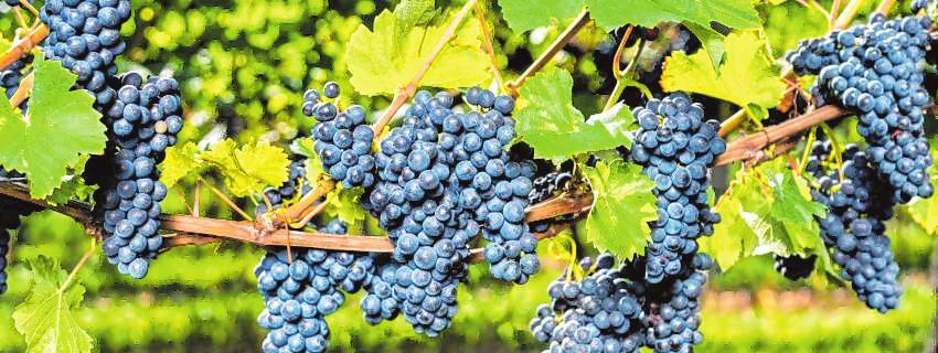 Eldorado für Weinfans