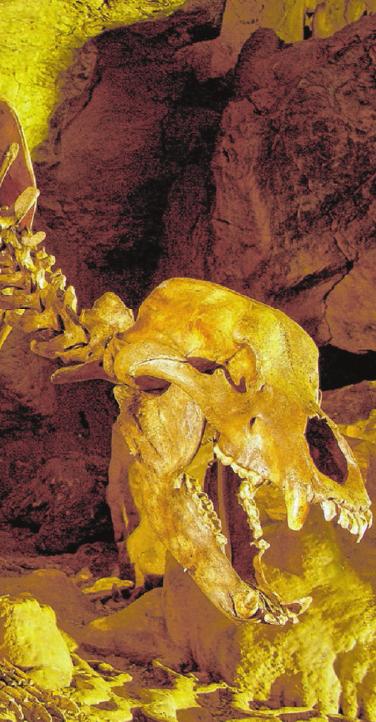 In den Höhlen auf der Alb sind Entdecker gefragt.