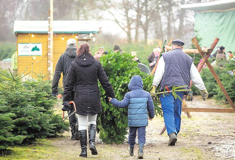 Der Weihnachtsbaumverkauf startet wieder. Foto: Leinemann