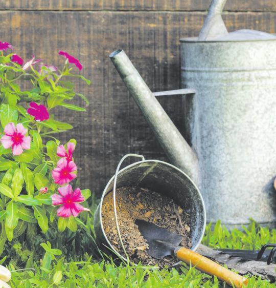 Ein Garten sollte grundsätzlich zu jeder Jahreszeit Freude bereiten. Foto: vecteezy