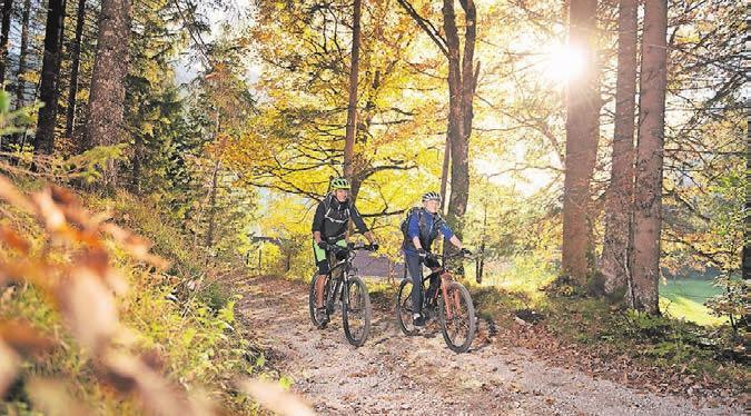 Radfahren durch die goldenen Herbstwälder...
