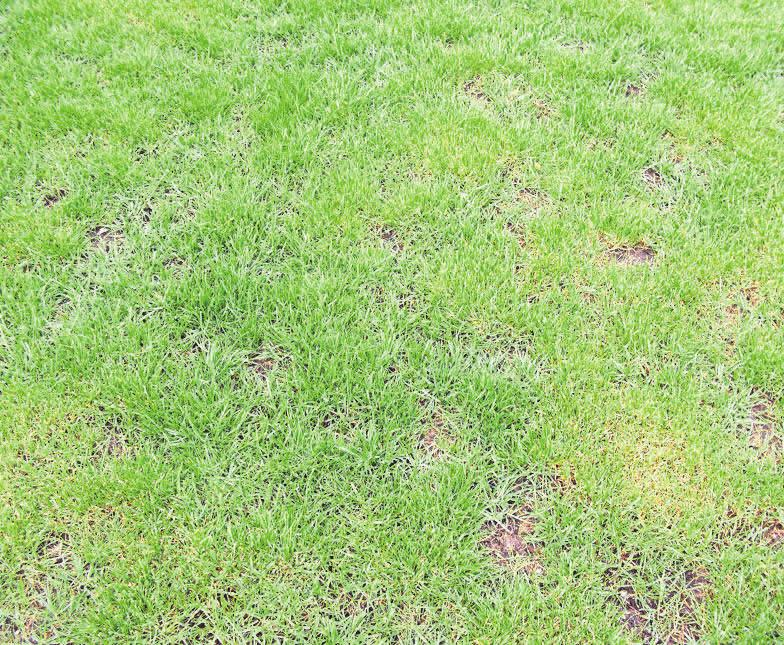 Der Rasen weist große Lücken auf und muss bearbeitet werden.