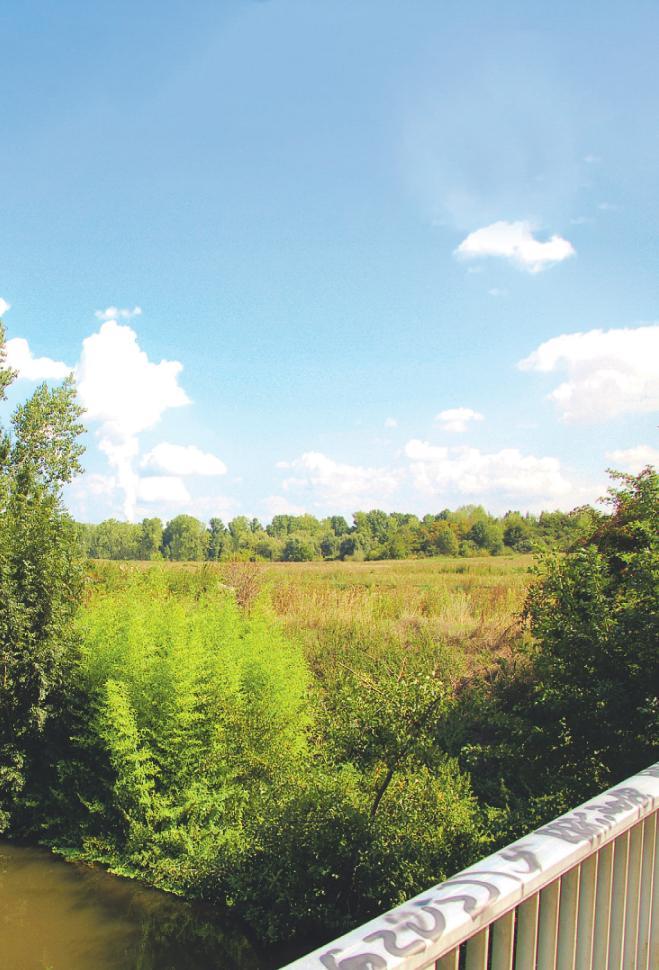 Auf dieser Grünfläche soll künftig Bedburgs neuer Stadtteil entstehen. Fotos: privat
