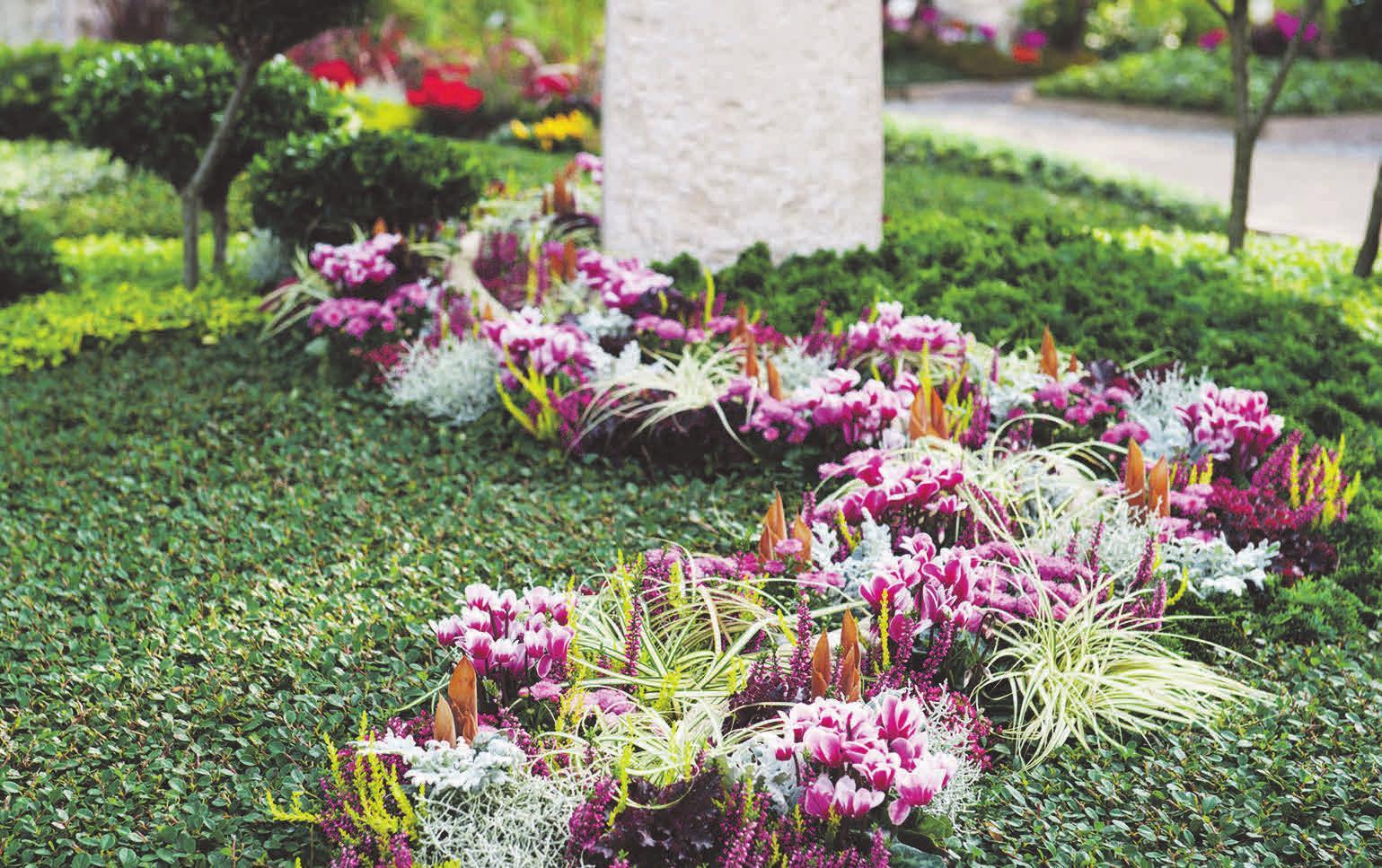 Das Alpenveilchen sorgt mit Farbvariationen von weiß bis pink für farbenfrohe Akzente auf dem Friedhof. Foto: djd/Gesellschaft deutscher Friedhofsgärtner/Margit Wild