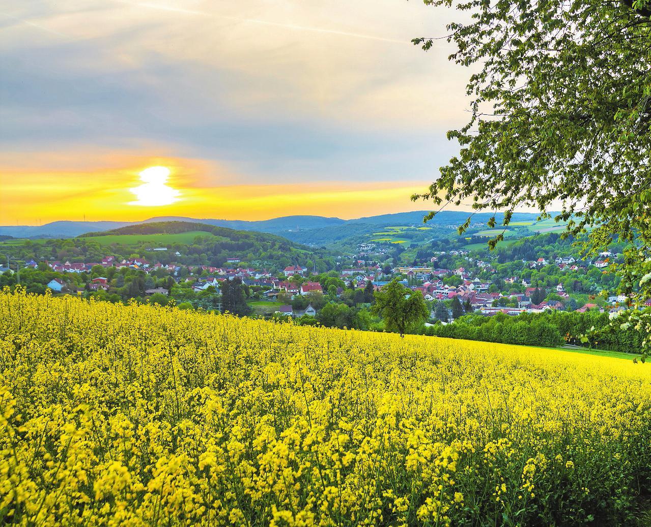 Bald erstrahlt die Westpfalz wieder in voller Blütenpracht – wie hier bei Kusel. FOTO: MICHAEL RÜBEL/ZRW