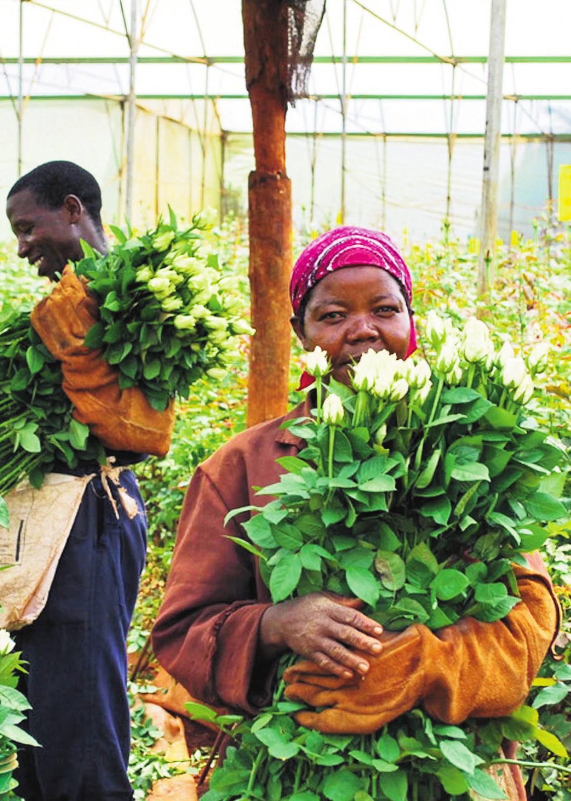 Mitarbeiter und Mitarbeiterinnen der Blumenfarm Simbi Roses in Kenia. Die Energieversorgung erfolgt über eine moderne Solaranlage. © djd/ecoligo.investments
