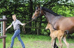 ... und Klaus Knickrehm, der die Pferde in den Stall bringt Fotos: Frauke Pöhlsen