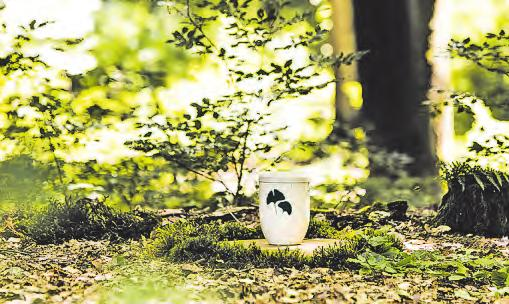 Eine Urne unter einem Baum in einem FriedWald Fotos: FriedWald