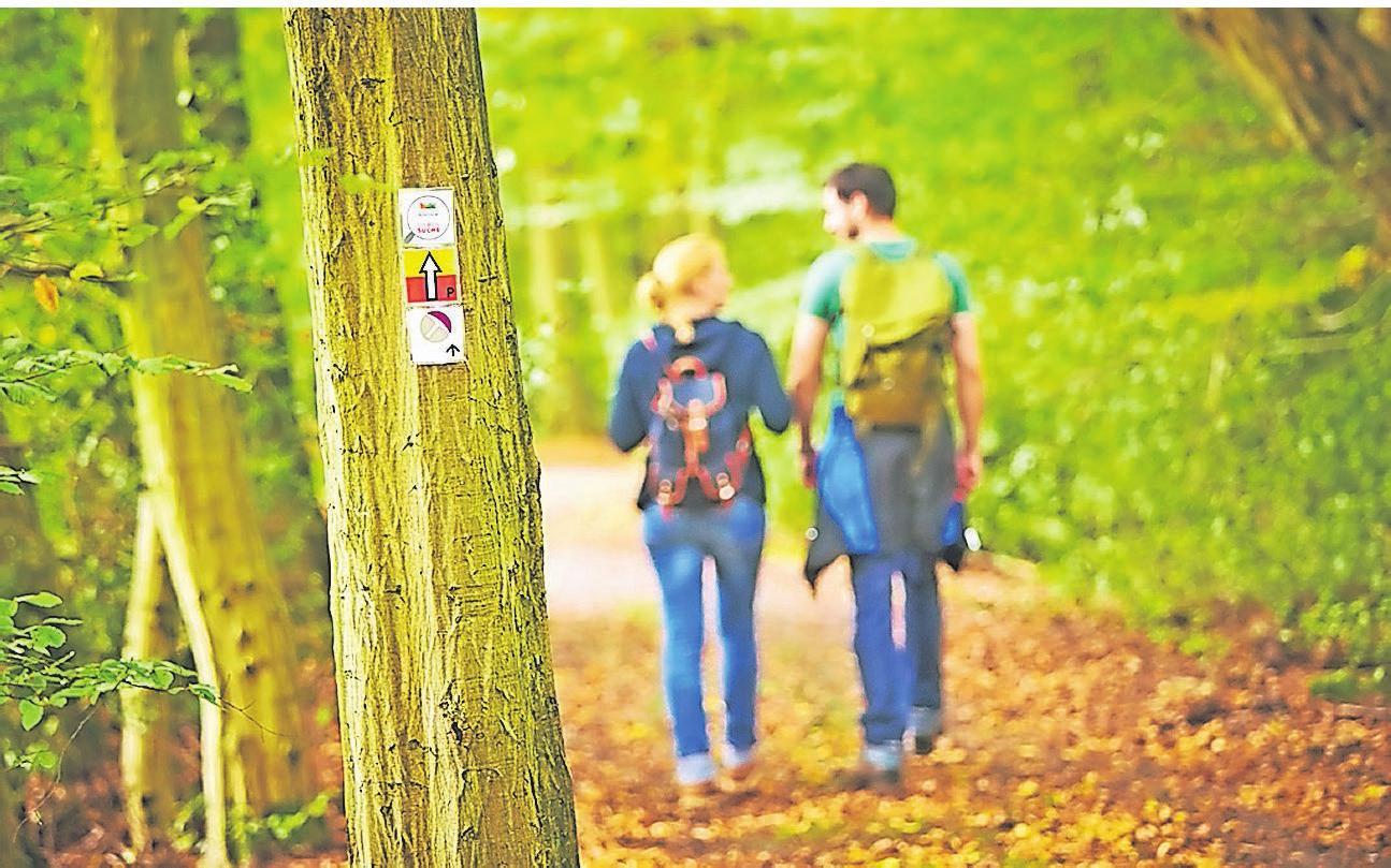 Bad Bentheim und seine Umgebung laden vor allem Naturfreunde zu ausgedehnten Wanderungen durch die Wälder ein. Wander-Events stehen ebenfalls auf dem Programm. Foto: Touristinformation Bad Bentheim