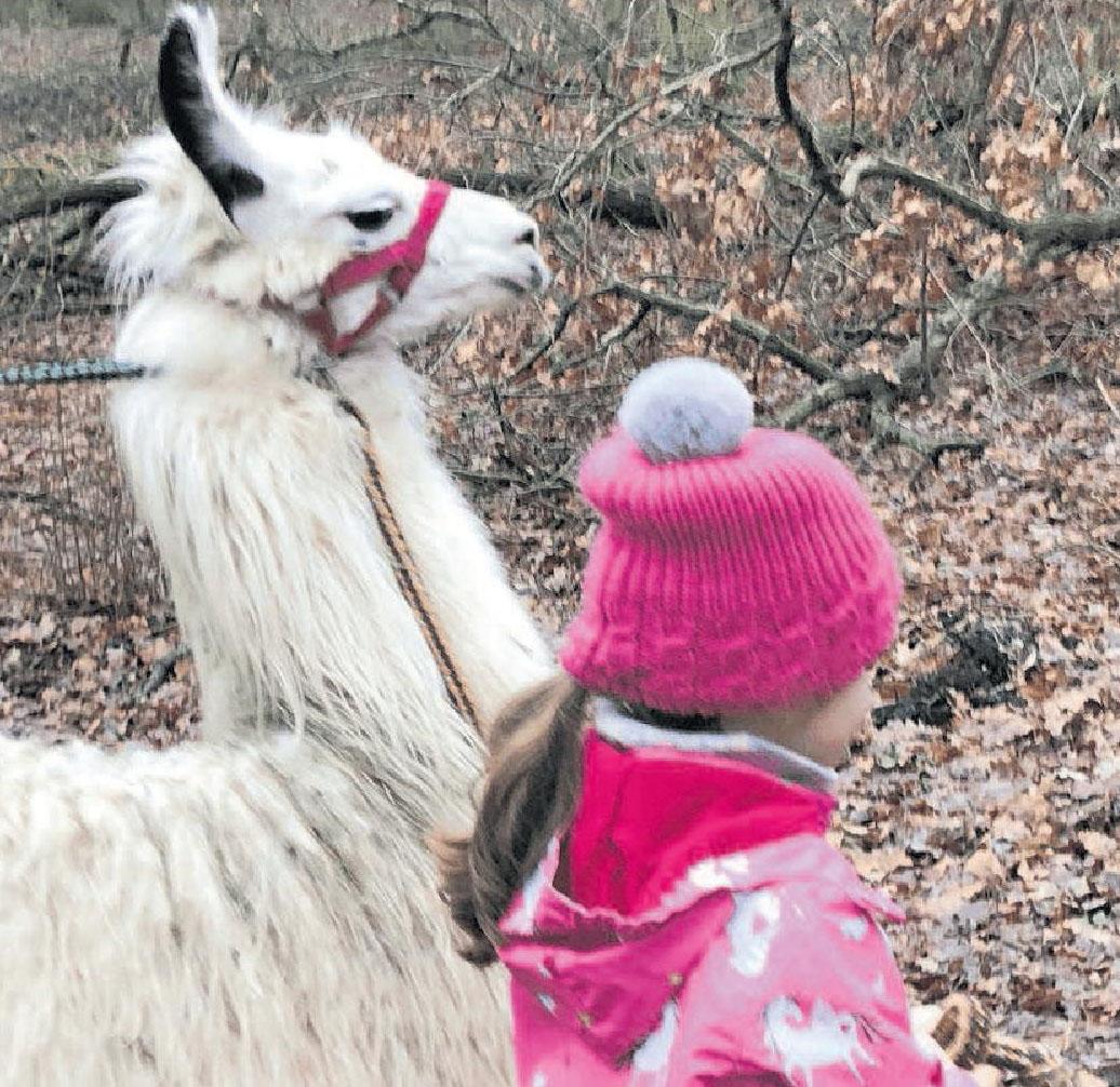 Mit den Lamas durch den Winterwald Image 1