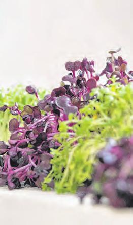 Auch Kresse ist ein guter Lieferant für Vitamine und Mineralstoffe. Foto: Robert Günther