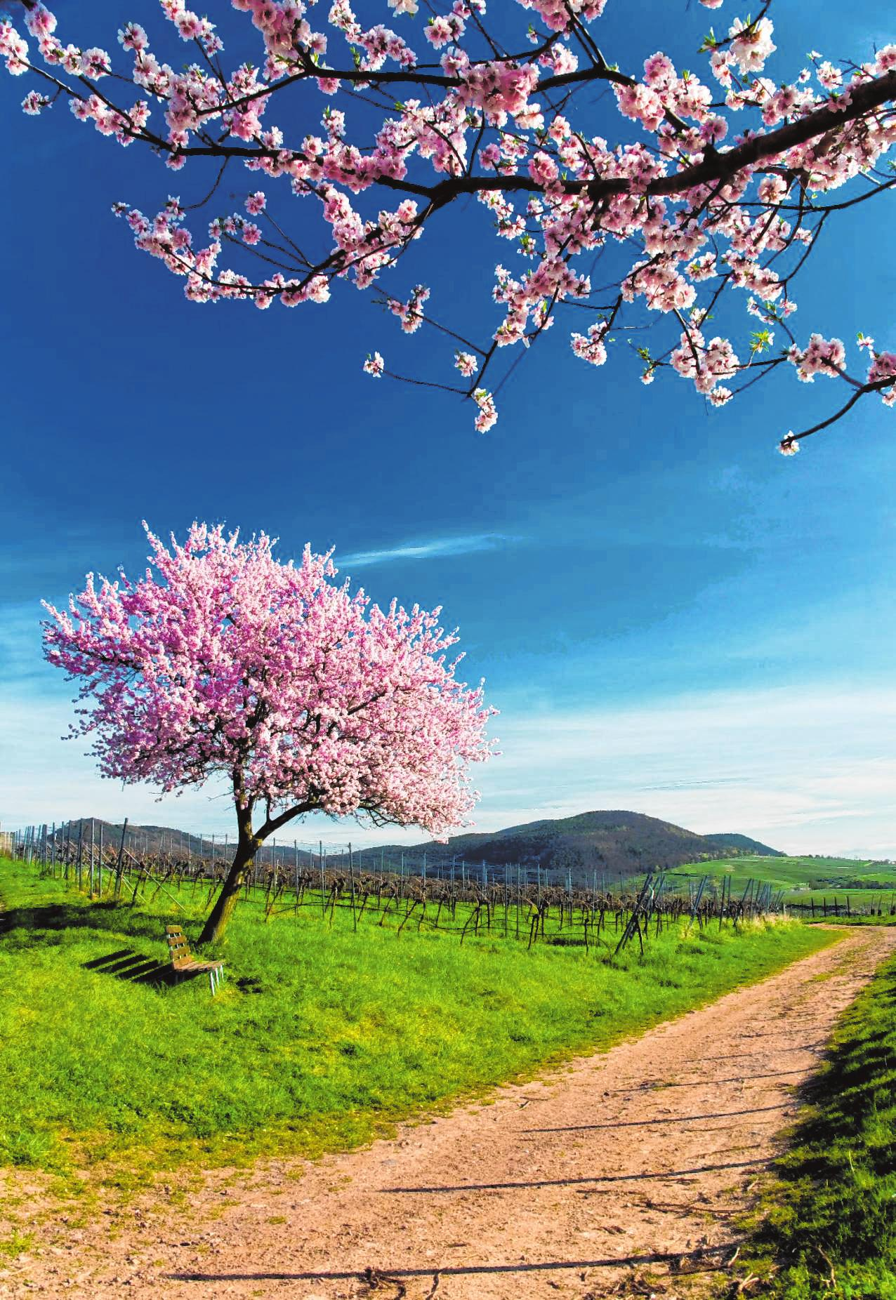 Der Frühling ist da Image 1