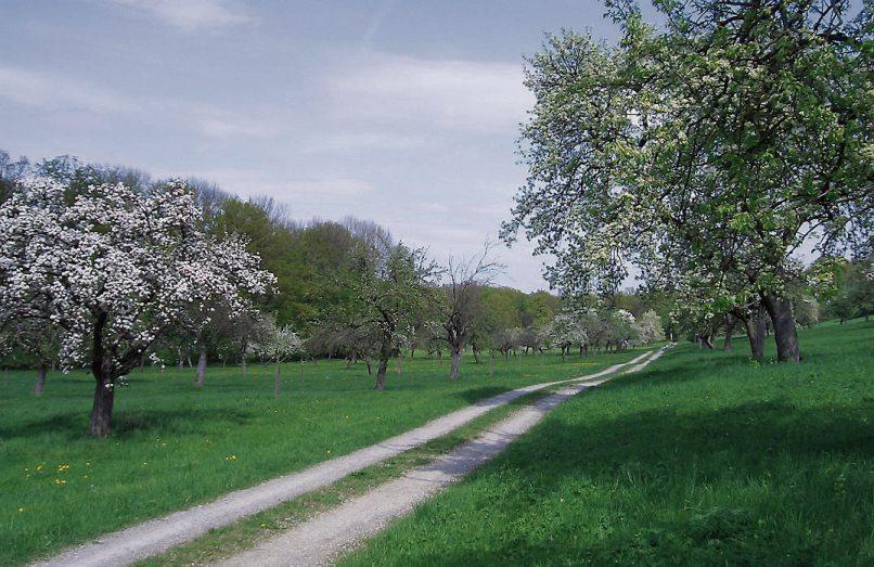 Impressionen: Die Nachbepflanzung im Eduard-Lucas-Garten in Mähringen...