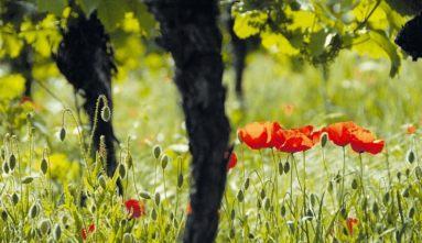 Lebendiger und fruchtbarer Boden