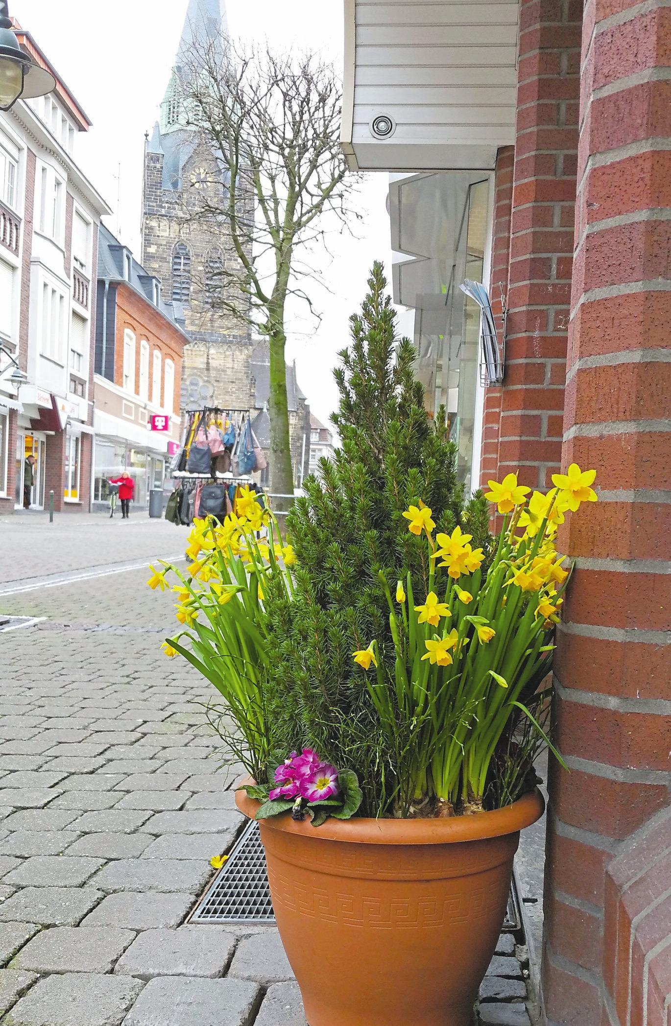 Frühlingsboten finden sich auch in der Ahlener Innenstadt. Foto: sdi
