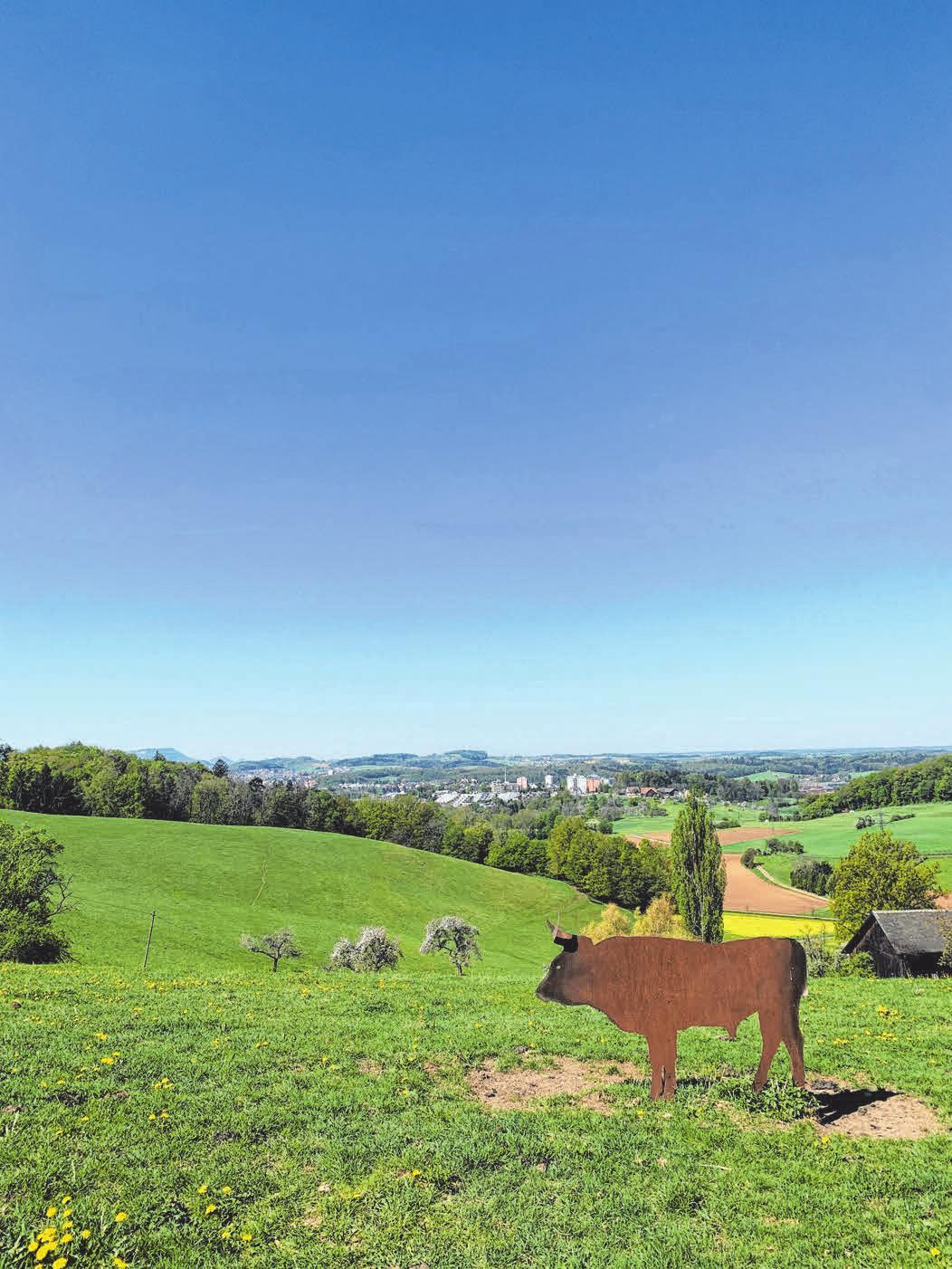 """Ein Foto des Panoramawegs """"bei den Auerochsen"""" in Aalen."""