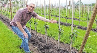 Michael Zoth, Betriebsleiter der Versuchsstation Schlachters, zeigt den Sortenerhaltungsgarten, in dem rund 300 Apfel- und Birnensorten heranwachsen. FOTO: VIBE