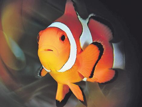 Bunte Fische trifft das Paar regelmäßig an. Bild: Peter Schultes Peter Schultes UW-PIC.de