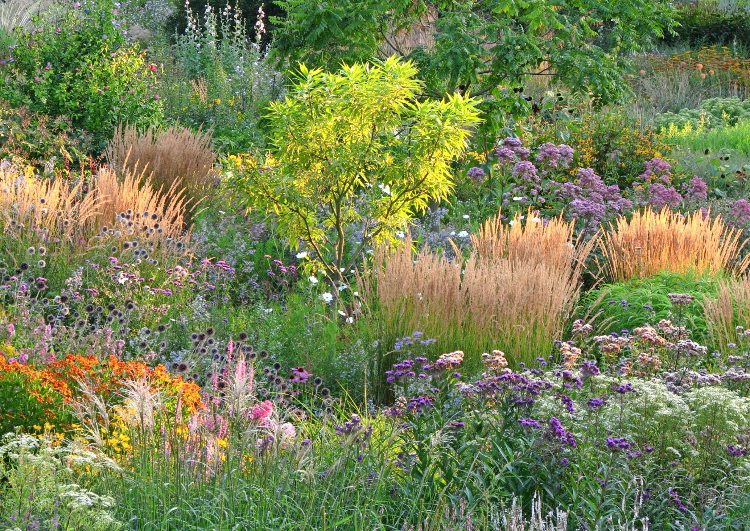 Wenn andere Pflanzen schlapp machen, bringen Präriepflanzen Farbe in den Garten: Etwa das europäische Sandrohrgras, kombiniert mit hohen Präriestauden wie Vernonie, Sonnenbraut und Purpurdost. Fotos: dpa