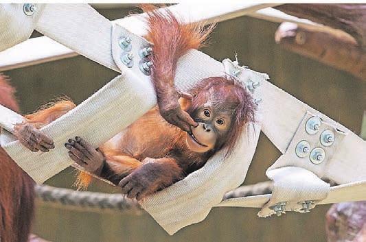 Ziehharmonikaähnliche Gebilde mit eingebauten Futtergaben¬ sind nicht nur bei den Affen der Hit.