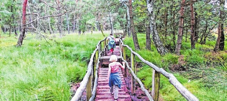 """Der Wanderweg Nordpfad Dör't Moorhat zum ersten Mal das Siegel """"Qualitätsweg Wanderbares Deutschland"""" erhalten. FOTO: TOURISTIKVERBAND LANDKREIS ROTENBURG (WÜMME)/MAG"""