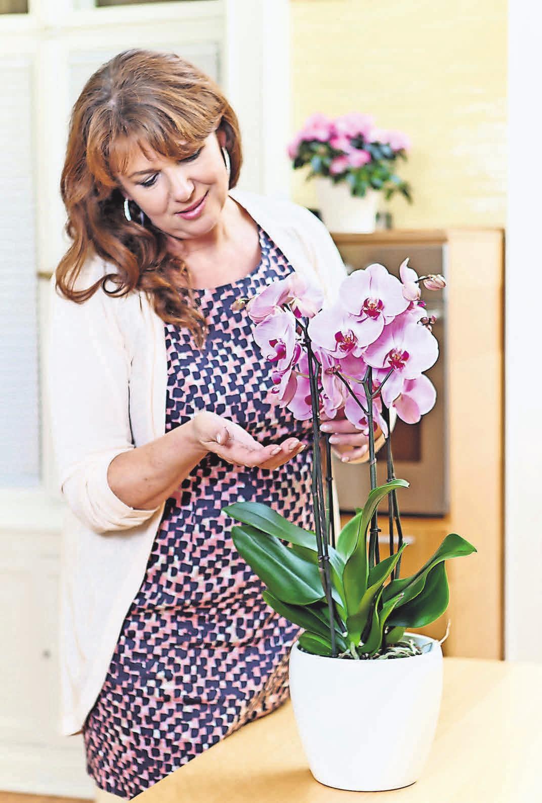 Bei blühenden Zimmerpflanzen zahlt es sich aus, auf hochwertige Ware aus dem Fachhandel zu setzen. FOTO: GMH